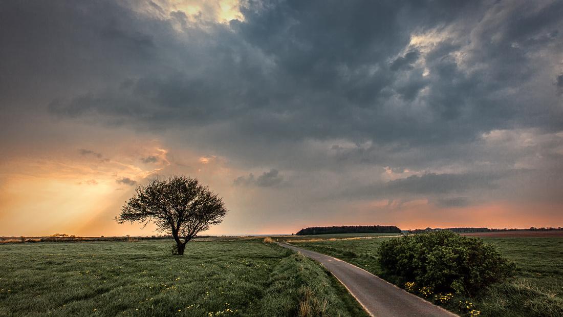 Foehr Baum Wolken dramatisch Abendstimmung